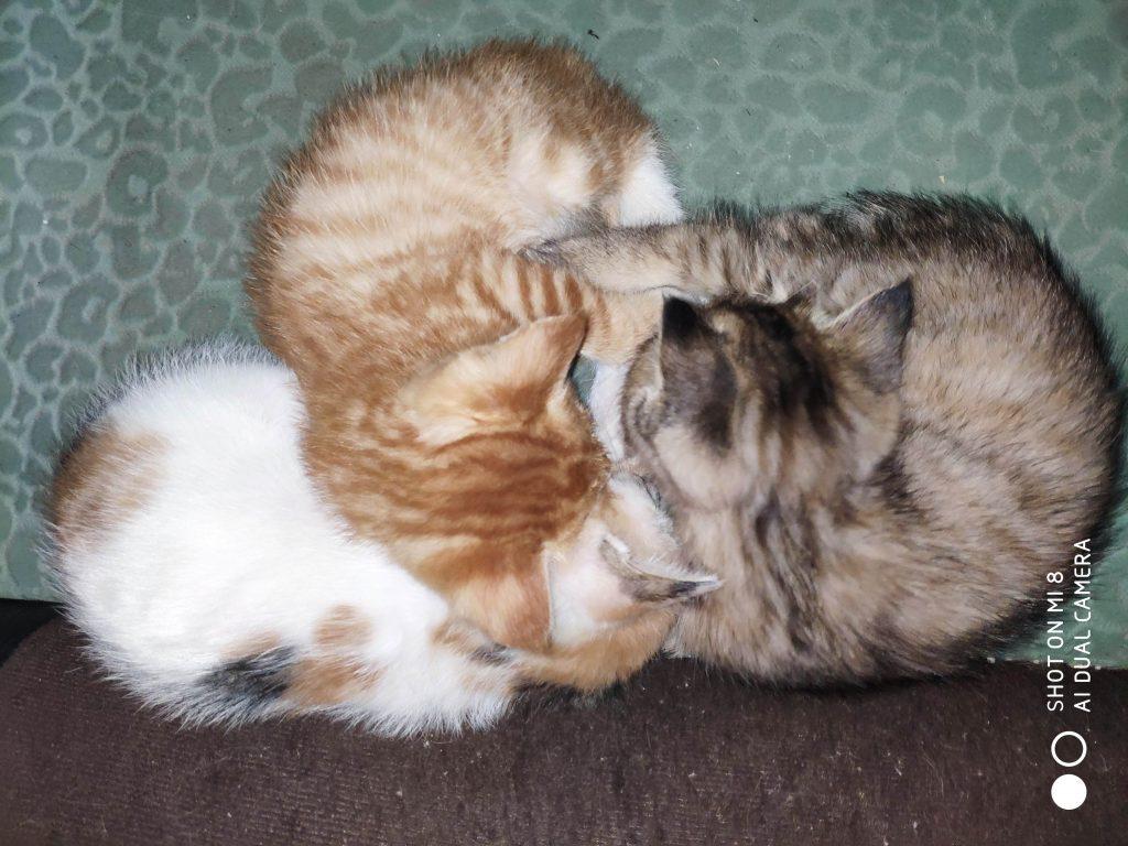 小猫成长记录(二)
