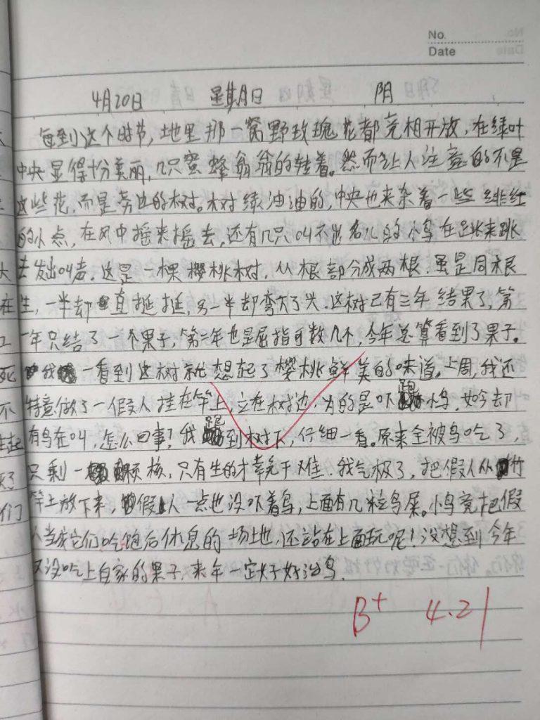 【中学日记】樱桃树
